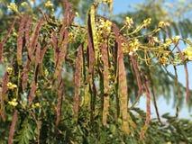 Fiore pieno di colore immagine stock
