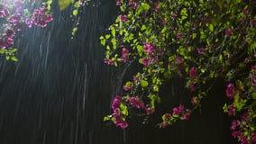Fiore in pioggia E Fotografia Stock