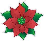 Fiore-Poinsettia rosso di natale illustrazione di stock
