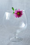 Fiore porpora Fotografia Stock