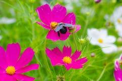 Fiore porpora bello fotografia stock libera da diritti