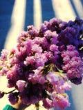 Fiore porpora del gypsophila del mazzo del fiore da congratularsi con luce ed ombre Fotografie Stock