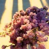 Fiore porpora del gypsophila del mazzo del fiore da congratularsi con luce ed ombre Stile dell'annata Fotografie Stock