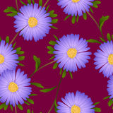 Fiore porpora dell'aster su Violet Red Background Illustrazione di vettore Fotografia Stock