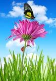 Fiore porpora della molla fotografia stock libera da diritti