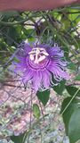 Fiore porpora di Alienlike fotografia stock