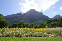 Fiore porpora di Beautilful nel parco a Città del Capo, Sudafrica Immagine Stock Libera da Diritti