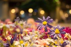 Fiore porpora falso con bokeh della lampada per fondo Immagini Stock