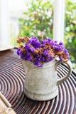 Fiore porpora secco in vaso Fotografia Stock