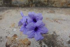Fiore porpora su fondo fotografie stock