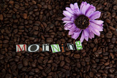 Fiore porpora sui chicchi di caffè Fotografia Stock