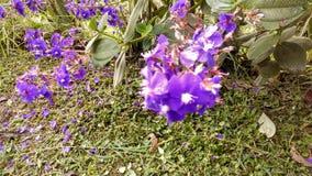fiore porpora vicino alla terra Fotografia Stock