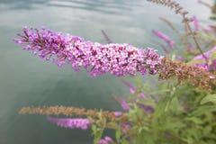 Fiore in primavera Fotografia Stock Libera da Diritti