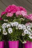 Fiore in primavera Immagini Stock