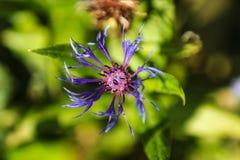 Fiore in primavera Fotografia Stock