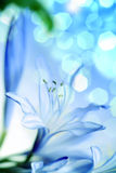 Fiore. profondità del campo a macroistruzione Fotografie Stock