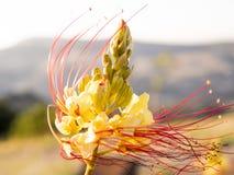 Fiore raro immagini stock libere da diritti