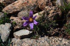 Fiore in rocce immagine stock