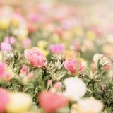 Fiore romantico Fotografia Stock