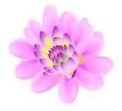 Fiore rosa Illustrazione di Stock