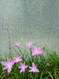 Fiore rosa Fotografie Stock Libere da Diritti