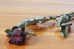 Fiore rosa appassito Immagini Stock Libere da Diritti