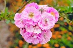Fiore rosa bello immagine stock
