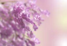 Fiore rosa combinato fotografia stock