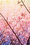 Fiore rosa con cielo blu Fotografie Stock