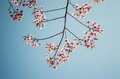 Fiore rosa con il cielo Fotografia Stock