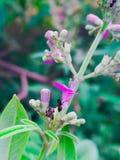 Fiore rosa con la formica fotografia stock libera da diritti