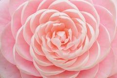 Fiore rosa con la struttura simmetrica fotografia stock libera da diritti