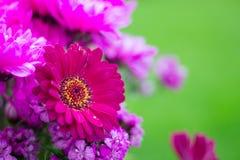 Fiore rosa con polline ed il fondo gialli della sfuocatura immagine stock libera da diritti