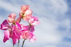 Fiore rosa contro il cielo blu con le nuvole Immagine Stock