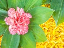Decorazione del fiore Fotografia Stock Libera da Diritti