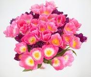 Fiore rosa dei tulipani su fondo bianco un'automobile di saluti Immagini Stock
