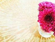 Fiore rosa del fiore Immagini Stock Libere da Diritti