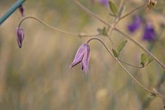 Fiore rosa del primo piano e di macro fotografia stock libera da diritti