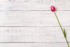 Fiore rosa del tulipano su fondo di legno Vista superiore, spazio della copia Immagine Stock