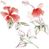 Fiore rosa del Wildflower in uno stile dell'acquerello isolato Fotografia Stock