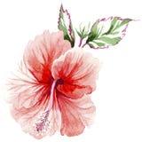 Fiore rosa del Wildflower in uno stile dell'acquerello isolato Immagine Stock Libera da Diritti