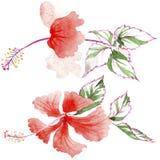 Fiore rosa del Wildflower in uno stile dell'acquerello isolato Fotografie Stock Libere da Diritti