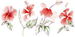 Fiore rosa del Wildflower in uno stile dell'acquerello isolato Immagini Stock Libere da Diritti