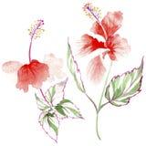 Fiore rosa del Wildflower in uno stile dell'acquerello isolato Fotografia Stock Libera da Diritti
