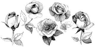 Fiore rosa del Wildflower in uno stile di vettore isolato illustrazione vettoriale
