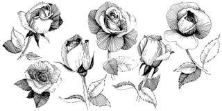 Fiore rosa del Wildflower in uno stile di vettore isolato royalty illustrazione gratis