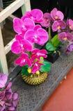 Fiore rosa dell'orchidea sul vaso Fotografie Stock