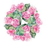 Fiore rosa della begonia, acquerello, ghirlanda Fotografie Stock Libere da Diritti