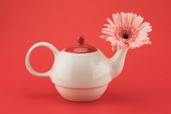 Fiore rosa di Gebera immagine stock
