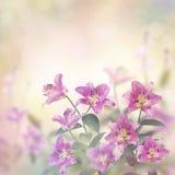 Fiore rosa di Lily Flowers Fotografia Stock